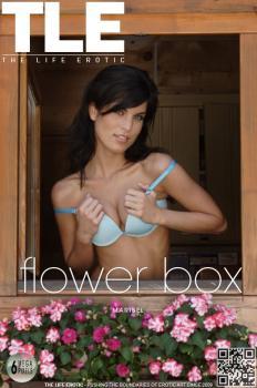 Metartvip- Flower Box
